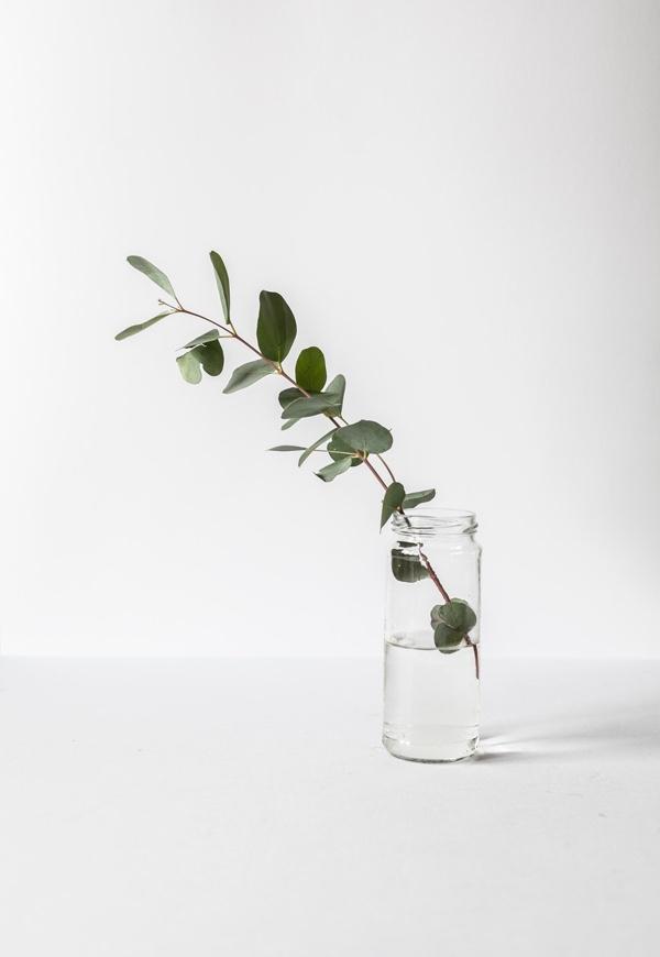 Decorative Image of Eucalyptus in a glas jar